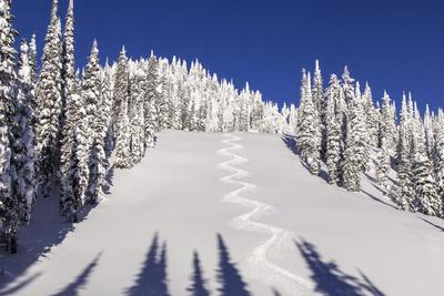 Ski Tracks Off of Lodi at Whitefish, Mountain Resort, Montana, Usa