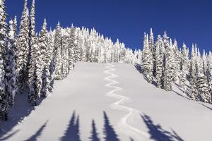 Ski Tracks Off of Lodi at Whitefish, Mountain Resort, Montana, Usa by Chuck Haney