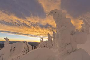 Snow Ghosts in the Whitefish Range, Montana, USA by Chuck Haney