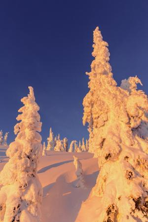Snowghosts Catch the Sunset at Whitefish Mountain Resort, Montana by Chuck Haney