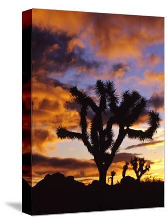Spectacular Sunrise at Joshua Tree National Park, California, USA