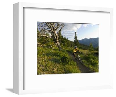 Steve Bjorklund Rides the Singletrack of the Bangtail Ridge Trail Near Bozeman, Montana, Usa Mr