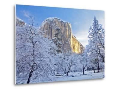 Sunrise Light Hits El Capitan Through Snowy Trees in Yosemite National Park, California, USA