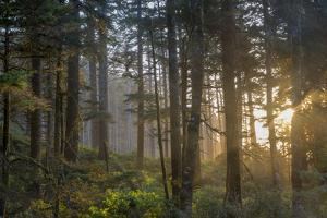Sunset Rays Penetrate the Forest at Heceta Head, Siuslaw NF, Oregon by Chuck Haney