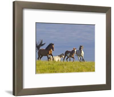 Wild Horses Running, Theodore Roosevelt National Park, North Dakota, USA