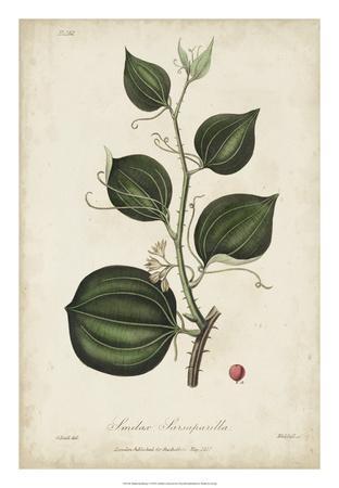Medicinal Botany I