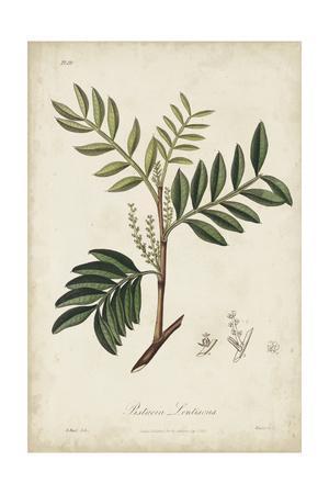 Medicinal Botany II
