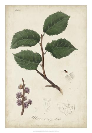 Medicinal Botany III