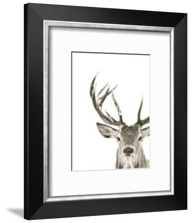 Ciervo 1-THE Studio-Framed Giclee Print