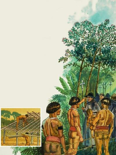 Cinchona Tree--Giclee Print