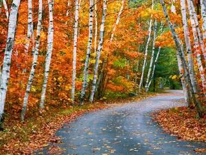Autumn Trees Lining Country Road by Cindy Kassab