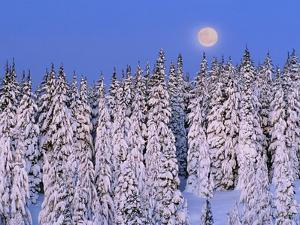 Moon Over Snow-Covered Trees by Cindy Kassab