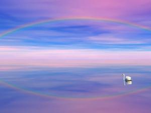 Rainbow Reflecting over Swan by Cindy Kassab