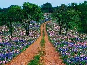 Wildflowers Along a Dirt Road by Cindy Kassab