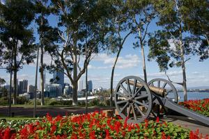 Australia, Perth. Kings Park. Fraser Avenue, Lemon Scented Gum Tree by Cindy Miller Hopkins