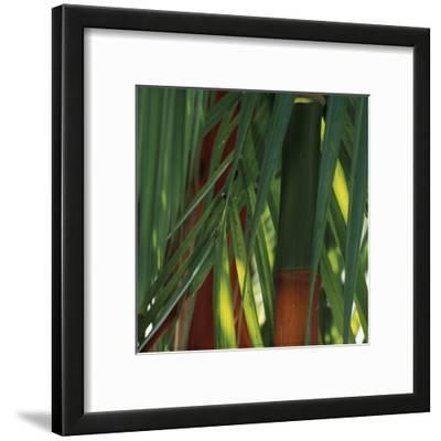 Bamboos, Costa Rica