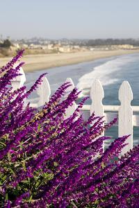 Coastal View with Flowers and Fence, Pismo Beach, California, USA by Cindy Miller Hopkins