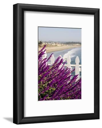 Coastal View with Flowers and Fence, Pismo Beach, California, USA