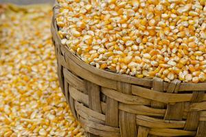 Dried Corn in Basket, Otavalo Handicraft Market, Quito, Ecuador by Cindy Miller Hopkins