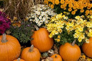 New York, Cooperstown, Farmers Museum. Decorative Pumpkin Display by Cindy Miller Hopkins