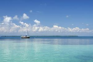 Sailboat in Clear Caribbean Sea, Southwater Cay, Stann Creek, Belize by Cindy Miller Hopkins