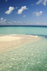 Sandbar, Goff Caye, Belize by Cindy Miller Hopkins