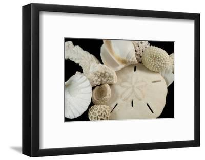 White Seashells, Sand Dollar, and Coral from around the World