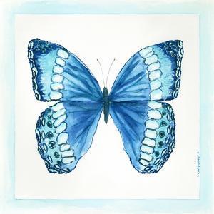 Butterfly II by Cindy Shamp
