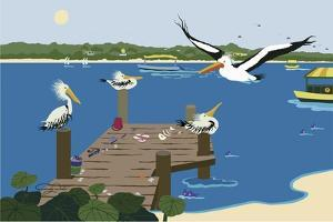 Where The Pelicans Gather by Cindy Wider