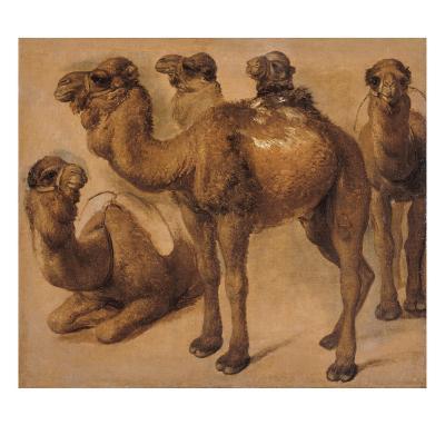 Cinq chameaux-Pieter Boel-Giclee Print