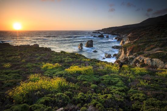 Cinquefoil Carpets The Coastline Near Monterey, California-Jay Goodrich-Photographic Print