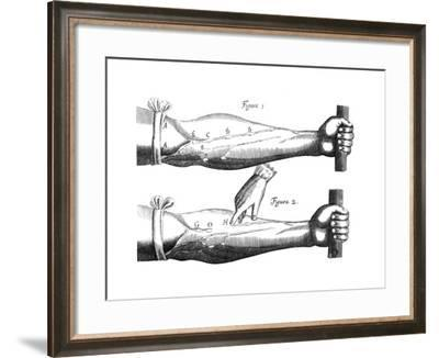 Circulation of the Blood, 1628--Framed Giclee Print