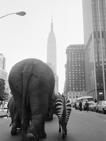 https://imgc.artprintimages.com/img/print/circus-animals-on-33rd-street_u-l-q1gdo2k0.jpg?p=0