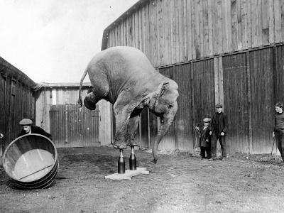Circus Elephant--Photographic Print