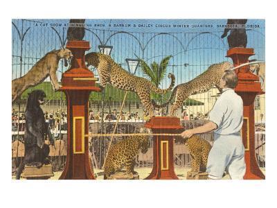 Circus Leopards, Panther, Lion, Sarasota, Florida--Art Print