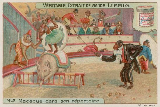 Circus of Monkeys--Premium Giclee Print