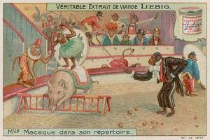 Circus of Monkeys