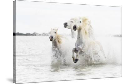 Horses Hight Key