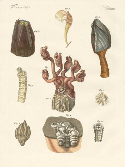 Cirrhipodas, Bristleworms or Brachiopods--Giclee Print