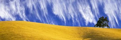 Cirrus Clouds over a Hillside, Templeton, San Luis Obispo County, California, Usa--Photographic Print