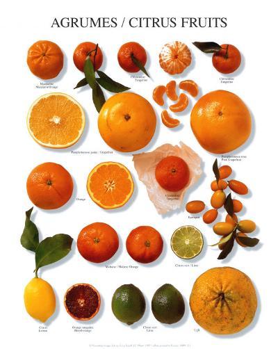 Citrus Fruit--Art Print