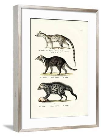 Civet, 1824-Karl Joseph Brodtmann-Framed Giclee Print