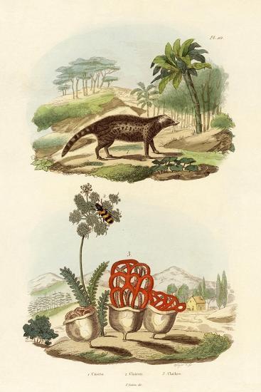 Civet, 1833-39--Giclee Print