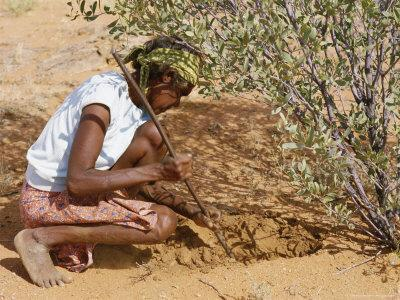 Aborigine Woman Digging for Wichetty Grubs, Northern Territory, Australia