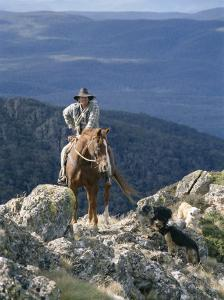Man on Horse with Dogs, 'The Man from Snowy River', Victoria, Australia by Claire Leimbach