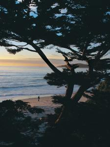 Sunset on Beach with Trees, CA by Claire Rydell