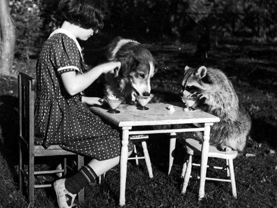 Claire Shorrock Giving Ice Cream Party with Pet Dog and Raccoon--Photographic Print