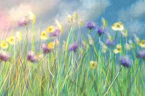 Cornflower Meadow by Claire Westwood