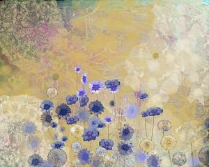 Cornflower by Claire Westwood
