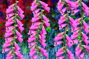 Foxgloves on parade by Claire Westwood